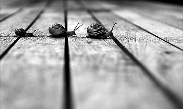 Snail family