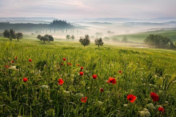 Tuscan spring