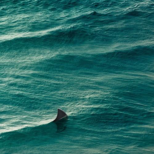 Its shark
