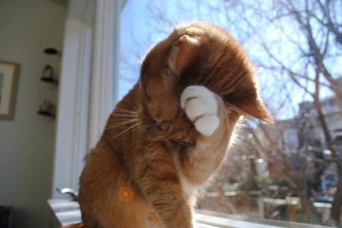 shy-cat.jpg